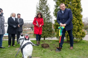 Powrót pingwinów do Śląskiego ZOO
